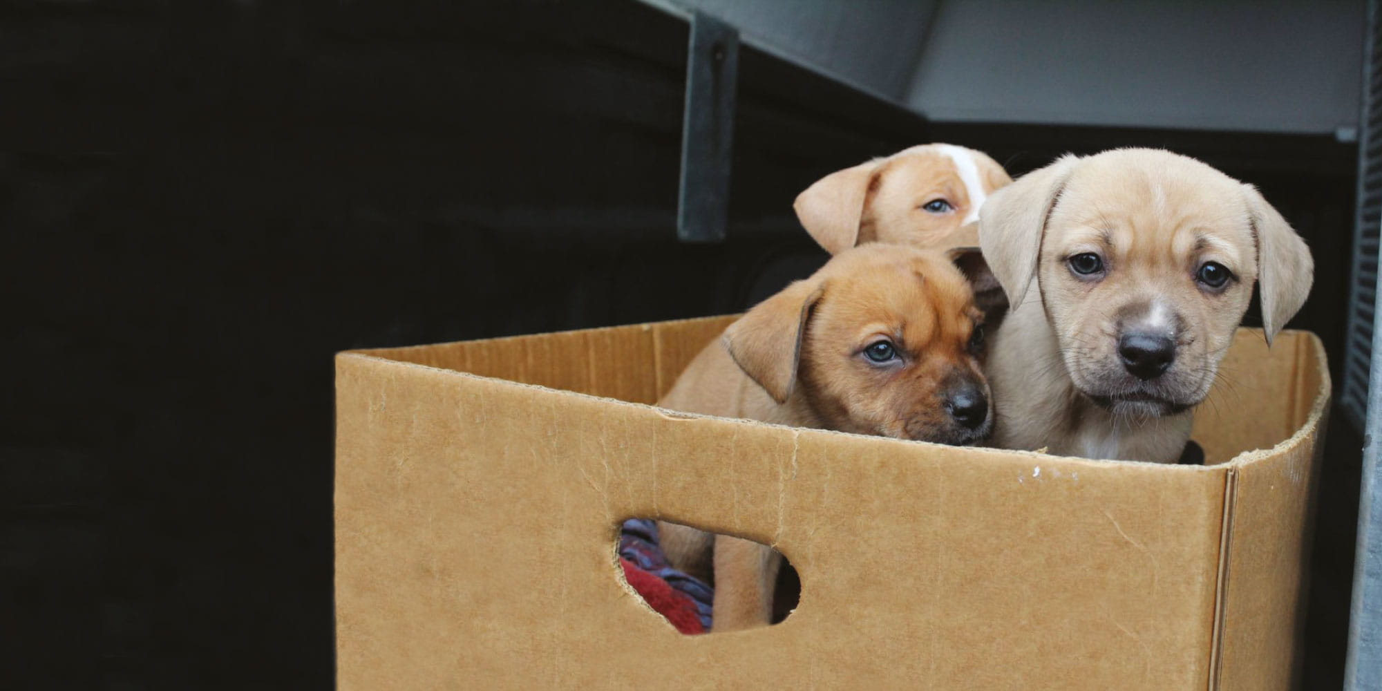 Help protect dumped animals