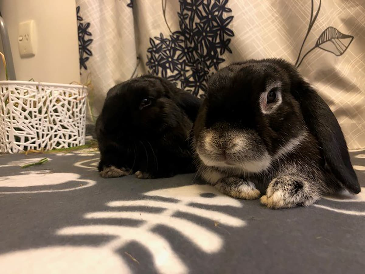 Happy adoption story: Chocolate and River