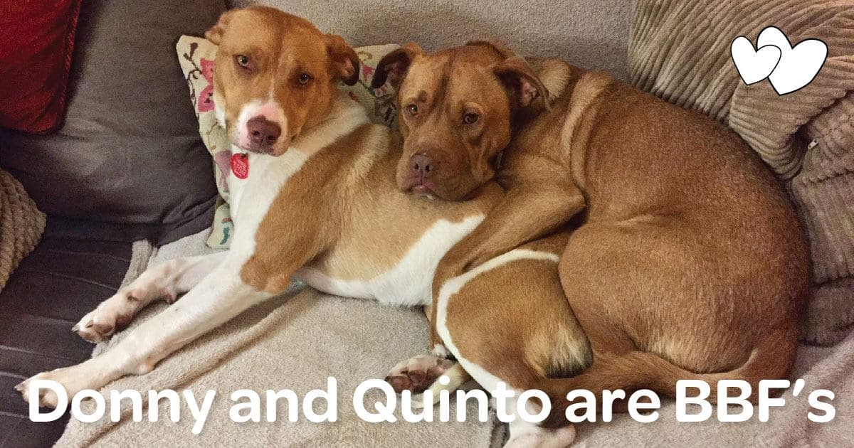 Happy adoption story: Donny and Quinto