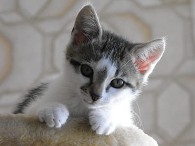 Foster parent - cats, kittens and rabbits