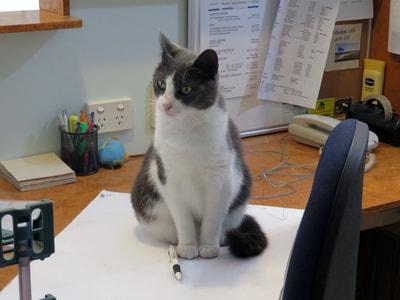 Whakatane Spca Cats For Adoption