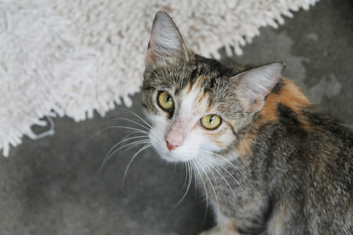 Auckland Community Cats Programme