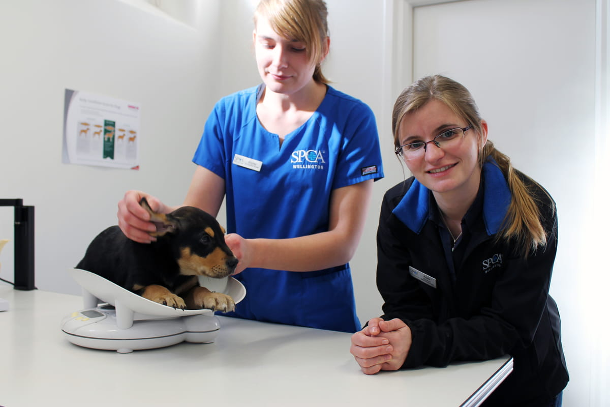 Wellington Veterinary Clinic