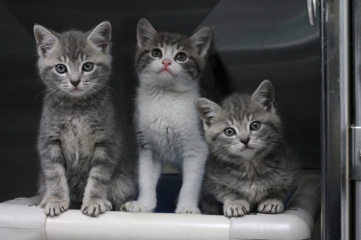 Gallery image: Kittens available for adoption