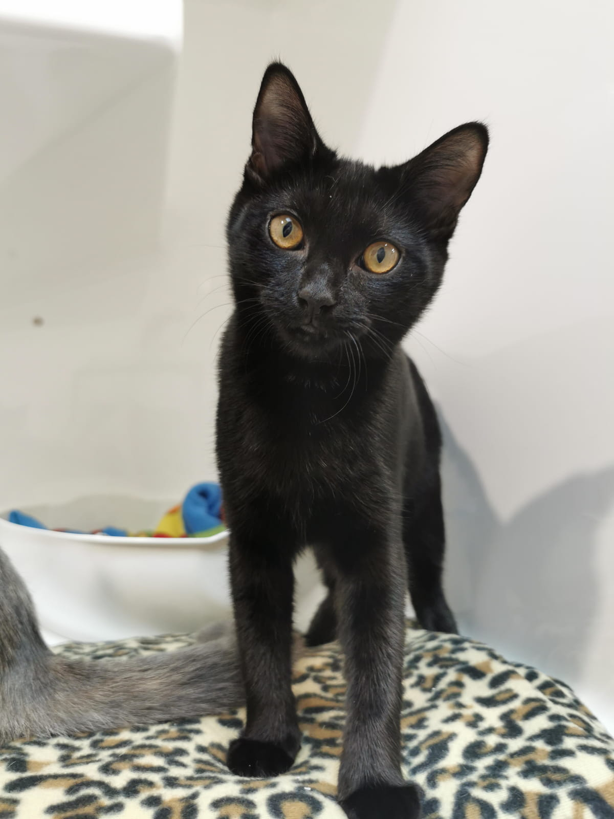 Adopt: Spot • SPCA New Zealand