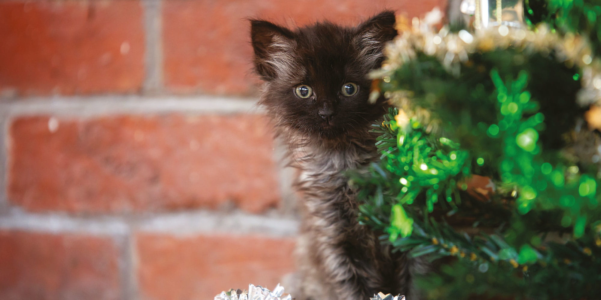 Help kittens this Christmas