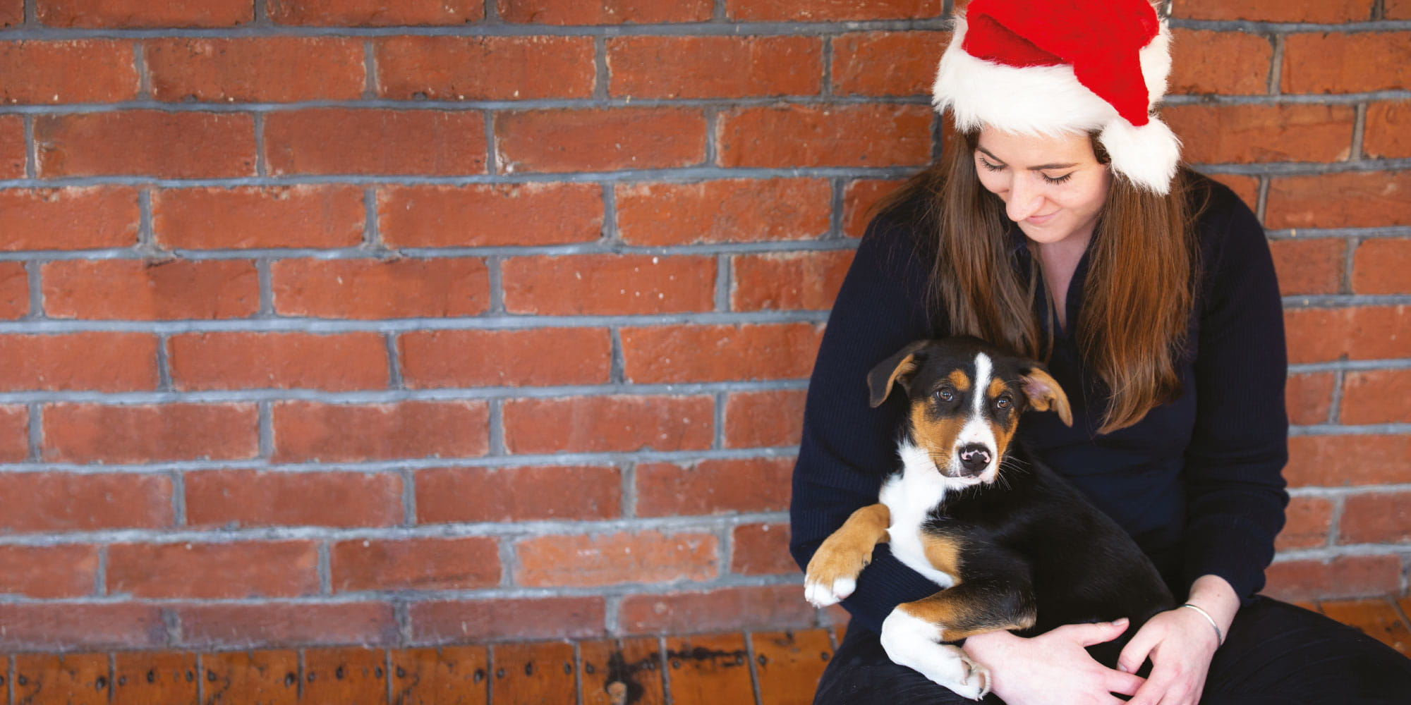 Help animals this Christmas